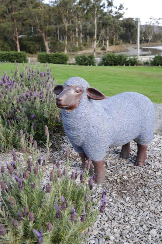 Port Arthur Lavender Farm in Tasmania, Australia